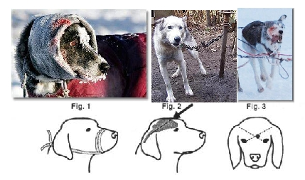 Sled Dog Abuse Industries Update