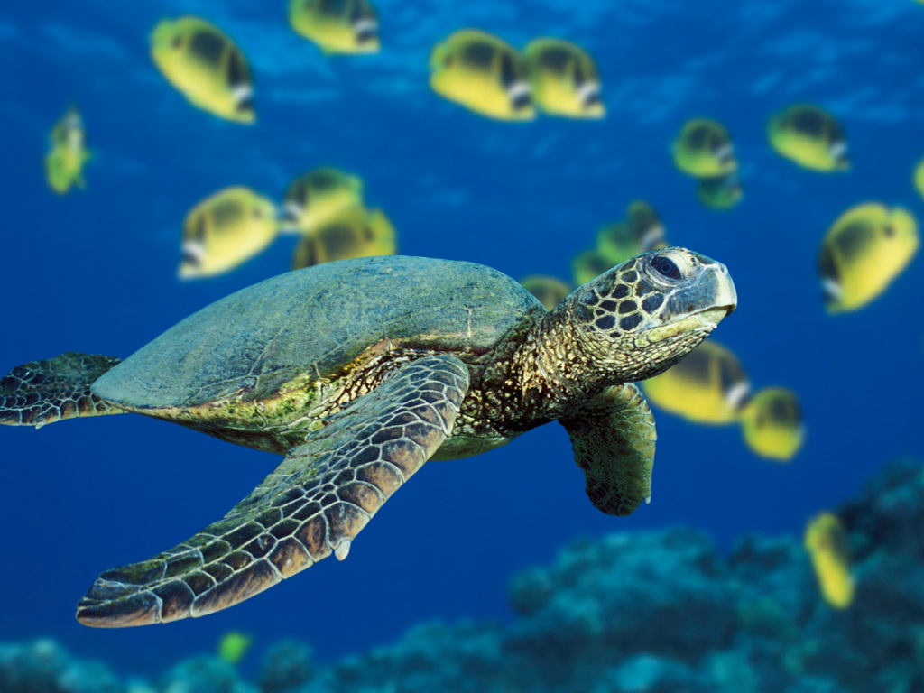 Stop Endangered Green Sea Turtle Experiments
