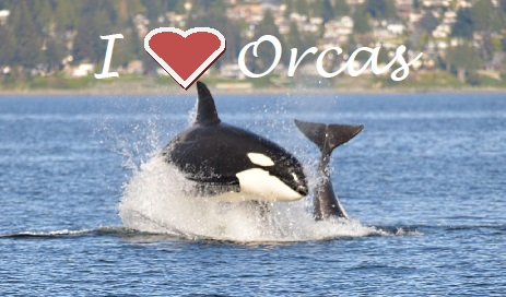 Orcas Get Some More Protection!