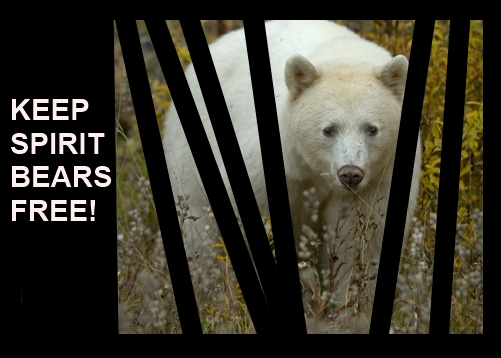 Free The Spirit Bear Petition