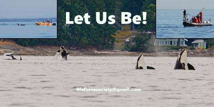 Transboundary Protection To Protect The Rights Of Orcas!