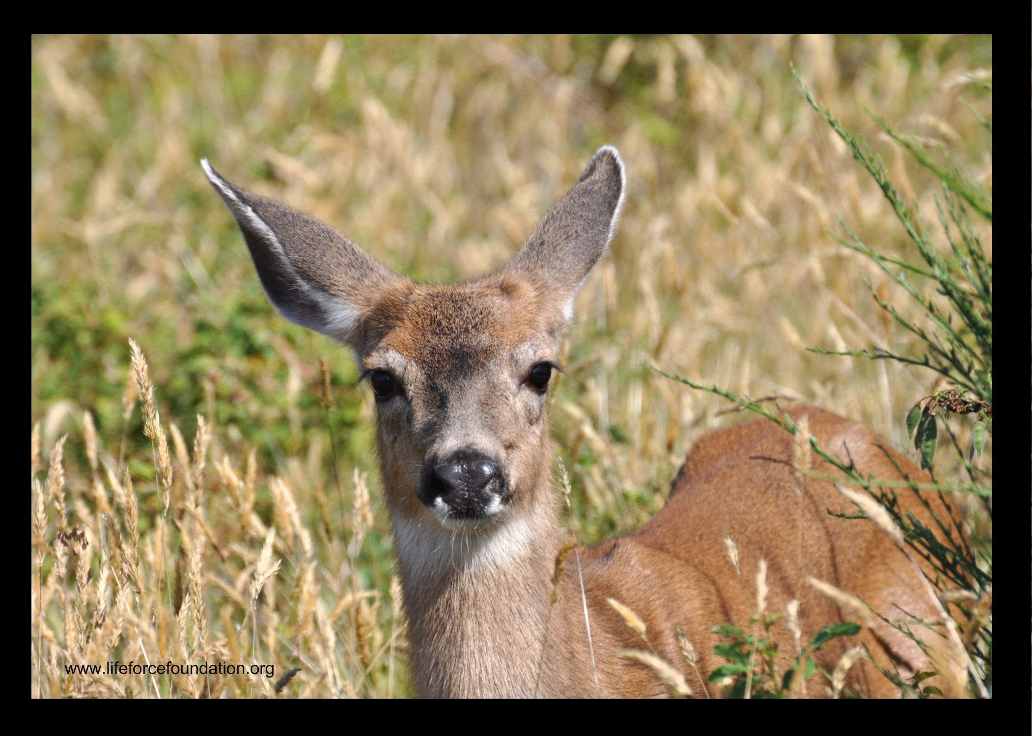 Stop The Killing Of 225 Deer