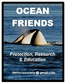 Equal Laws To Protect West Coast Endangered Orcas