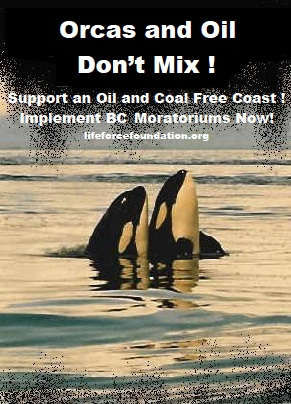 Enact The Emergency Order To Save Orcas And Oceans!