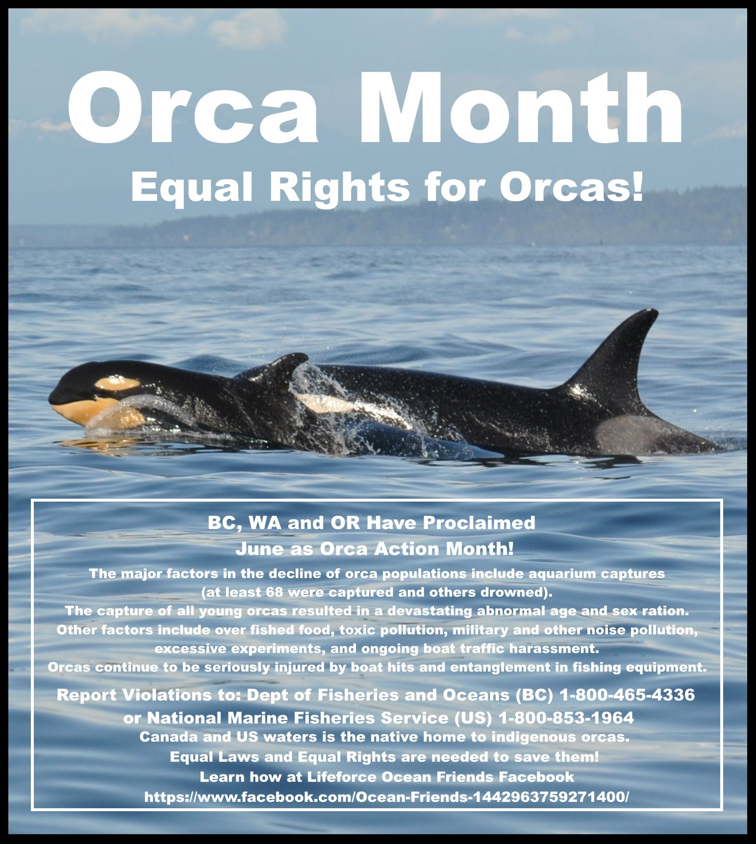 June 7th Update: Orca Action Month
