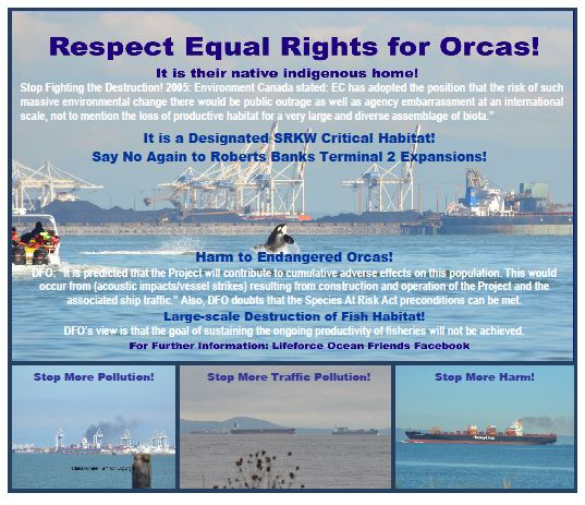 Take Action > June Is Orca Action Month!