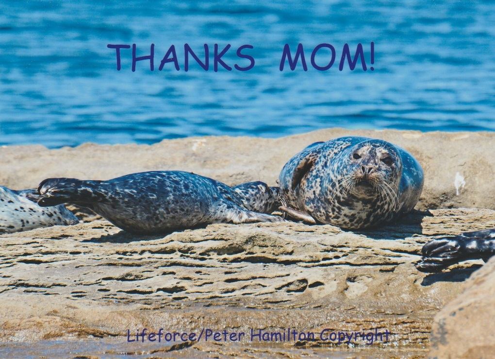 Thank You To All Moms!