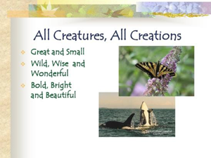 All Creatures, All Creations - An Online Nature Photography Book